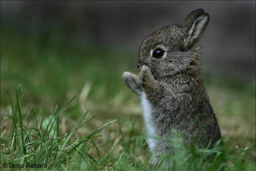 [photo of a bunny with its paws in the air]