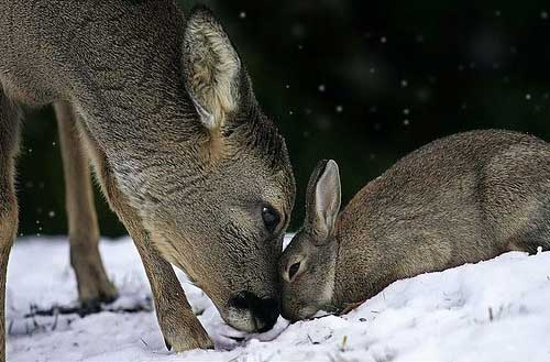 [photo of a deer and bunny together]