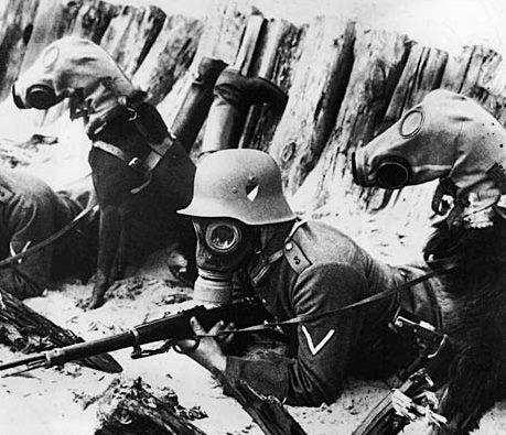 German dogs wearing gas masks