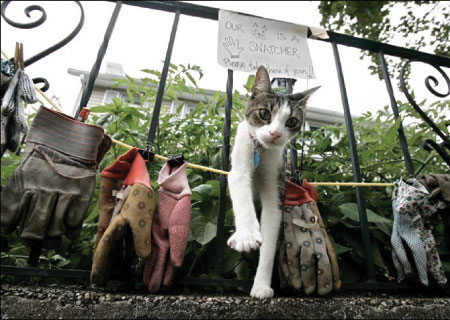 [photo of a cat walking through fence - his collection of stolen gloves is nearby]