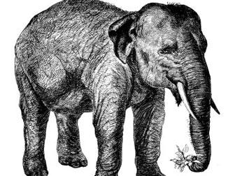 iStock_AI_elephant.jpg