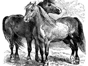 iStock_AI_horses.jpg