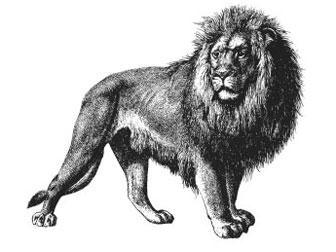 iStock_AI_lion.jpg