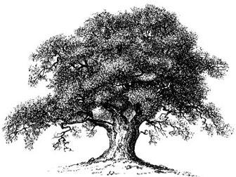 iStock_AI_oaktree.jpg